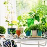 Små vaser, stilleben och växter. Samt nya krukor av Erika Pekkaris för Svenskt Tenn. (Foto Svenskt Tenn)