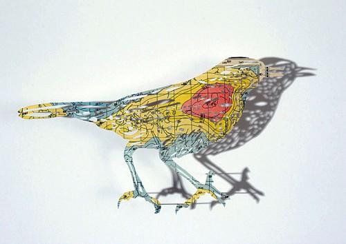 Claire Brewsters fåglar över världen. (Foto Claire Brewster)