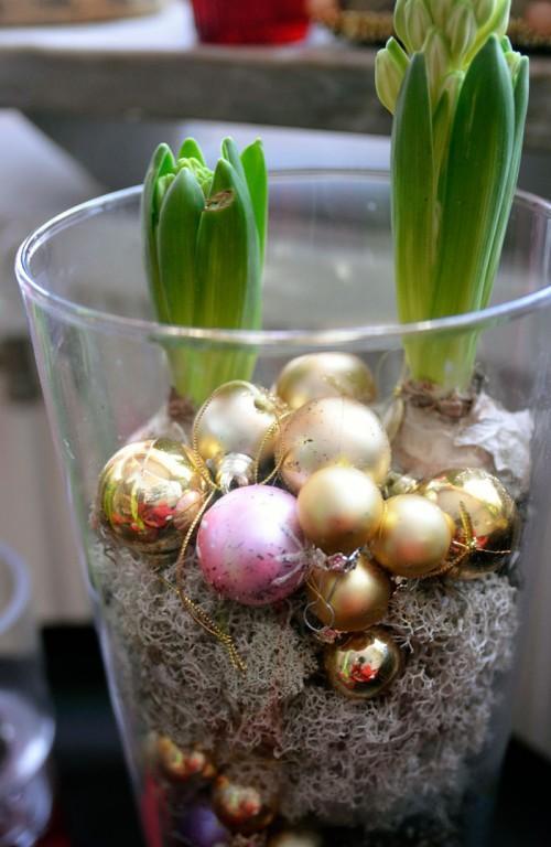 Juliga hyacinter. Och ja, kulor är lite av tema i år...(Foto Kurbits)