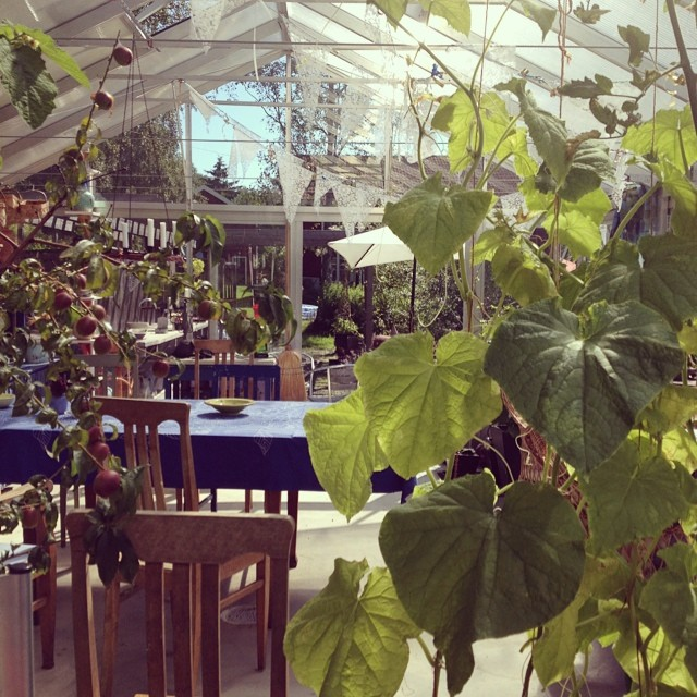 Mina föräldrars inspirerande växthus och trädgård. (Foto Kurbits)