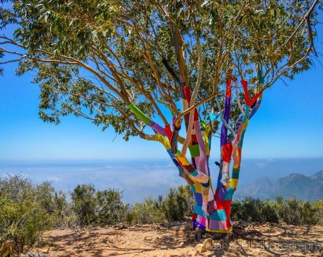 Det första av Yarnbombers projekt, där han precis lärde sig sticka och hade som mål att tagga in detta träd i Cold Spring, 2012. (Foto Stephen Duneier/Yarnbomber)