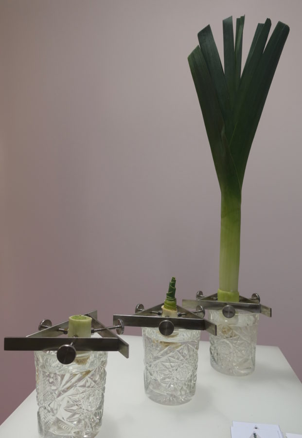 Älskade också denna problemlösarmojäng. Fritt fram att odla en ny purjolök med lite fiffig hjälp av en variant av julgransfoten. Kläm fast valfri rotgrönsak - purjo, endivesallad, salladslök - och odla en ny istället för att slänga. Produkten heter Regrow och är framtagen av Madeleine Nelson som just nu går på Beckmans. (Foto Kurbits)