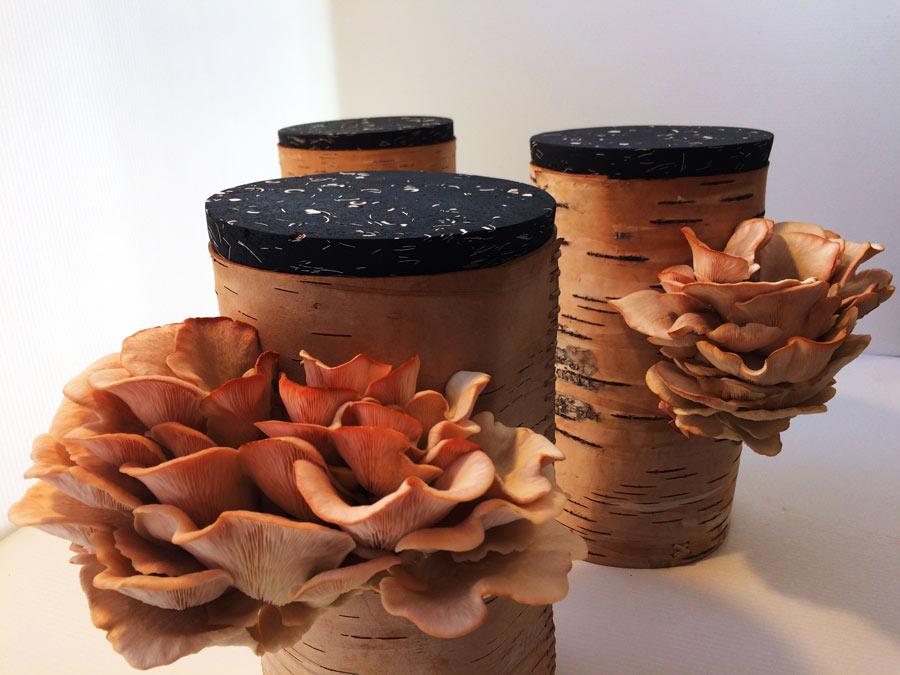 Svampburkarna i näver är framtagna av Design Stories som ett sätt att möta upp behovet att odla mer inomhus, året om. Näverburkarna är gjorda av Bror Forslund. Burkarnas lock är gjorda i materialet Compostable Composite och består av kol, äggskal och kaffe. Emeli Höcks har tillverkat dem. Detta är prototyper som lanseras under 2018 för att kunna sättas i produktion. (Foto Design Stories)